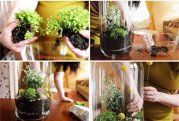 Haz tu propio terrarium