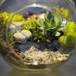 Cómo hacer tu propio terrarium